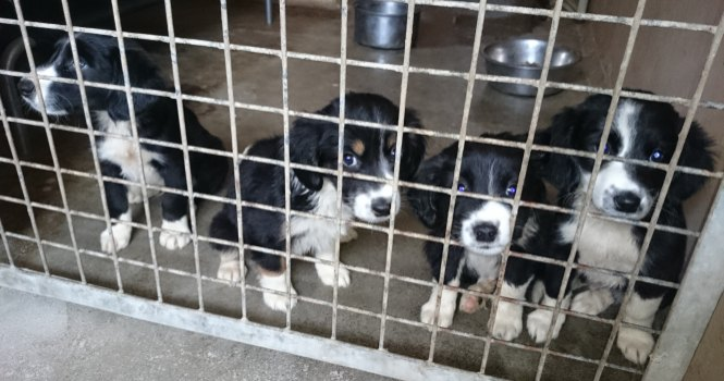Galway City Council Dog Pound